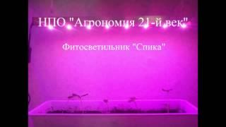 Светильник фитосветодиодный для растений на подоконнике «Спика», гарантийное обслуживание - 1 год(Светильник фитосветодиодный для растений на подоконнике «Спика» от НПО