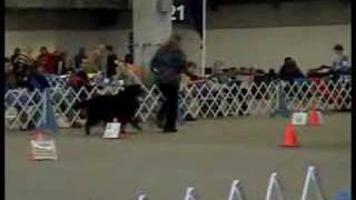 Denver Dog Show Rally Obedience