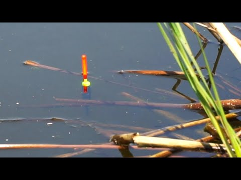 Рыбалка на КАРПА-ВЕЛИКАНА на простую снасть!