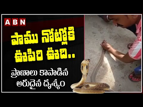 Man Rescue Snake By Giving Breathe into the Snake's Mouth   Viral Video Telugu   ABN News teluguvoice