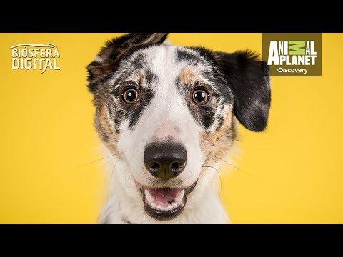 ¡Los perros entienden el lenguaje humano! - Biósfera Digital