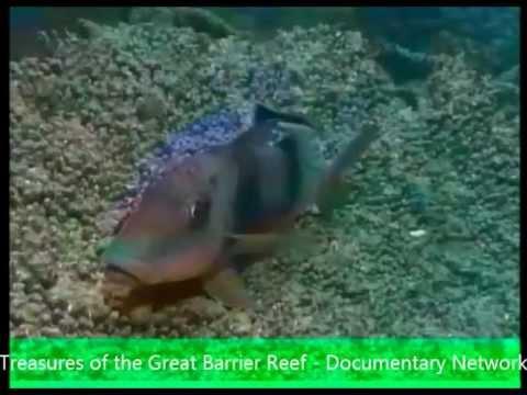 Rio Grime-West papua  (45 minutes)