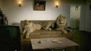 Funny lion Sex video