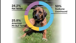 Dog DNA: Breed Surprises Explained