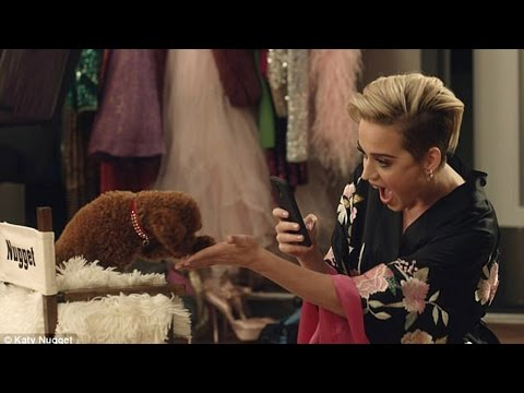 Katy Perry's Dog Nugget Makes His ACTING Debut!