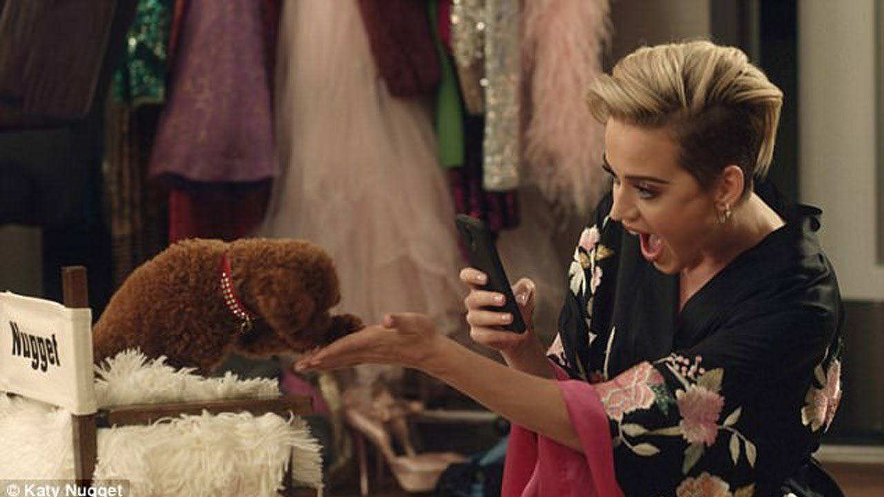 Katy Perrys Dog Nugget Makes His Acting Debut Youtube