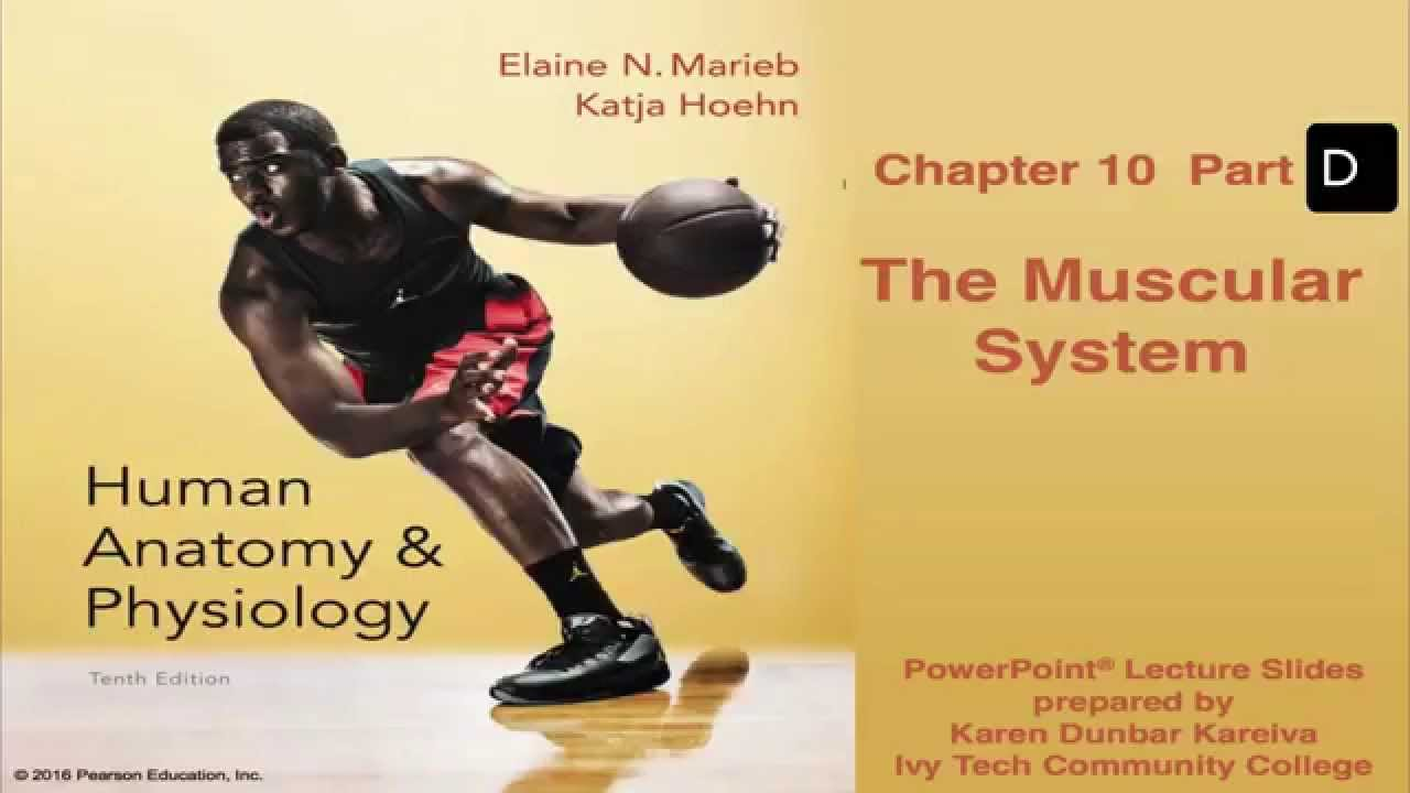 Anatomy and Physiology Chapter 10 Part D Lecture: The Muscular ...