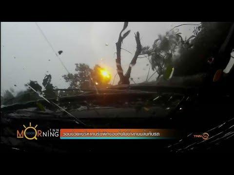 ย้อนหลัง วอนช่วยแชร์หาคนรับผิดชอบต้นไม้ข้างถนนล้มทับรถ