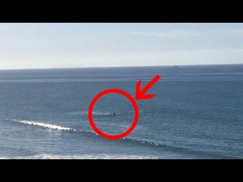Shark attack in Santa Barbara - Rincon Beach