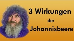 3 Wirkungen der Johannisbeere