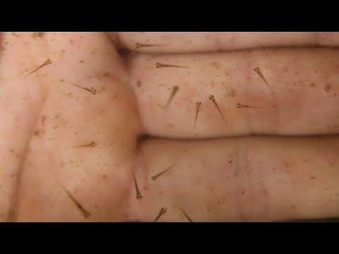 Baby Fish! Was Breeding Successful | Fish Breeding Techniques - Part2