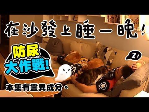 【黃阿瑪的後宮生活】在沙發上睡一晚&直擊阿瑪撞牆