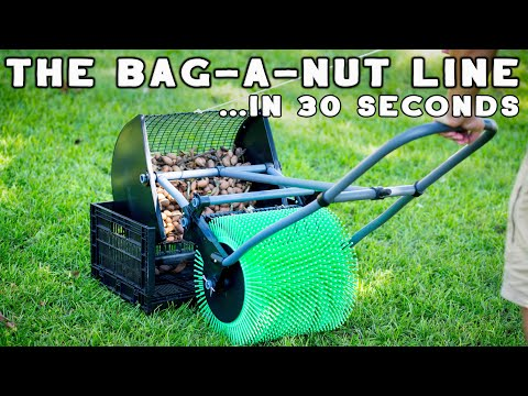 Nut Gatherers for Yard Cleanup - How to Remove Nuts From Your Lawn