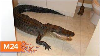 Россиянам запретят заводить экзотических животных - Москва 24
