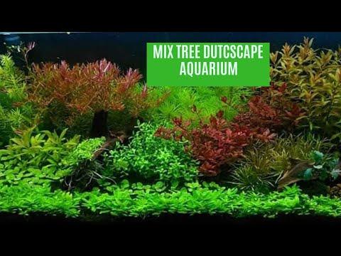 mix-tree-dutch-aquascape