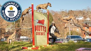 Feather & Geronimo: Highest jump by a dog & skipping dog  Meet The Record Breakers