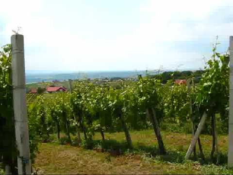 Austria Travel: The Beautiful Vineyards in Southern Styria