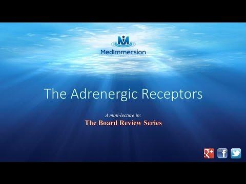 The Adrenergic Receptors