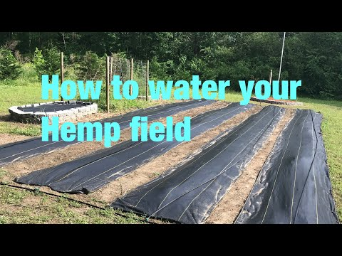 Growing Hemp, and how to set up your irrigation system.