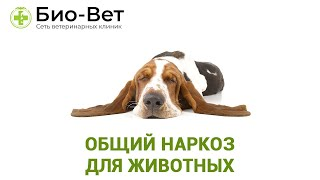 Общий наркоз для животных  Последствия. Ветеринарная клиника Био-Вет.