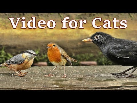 TV for Cats – Birds Sounds and Video