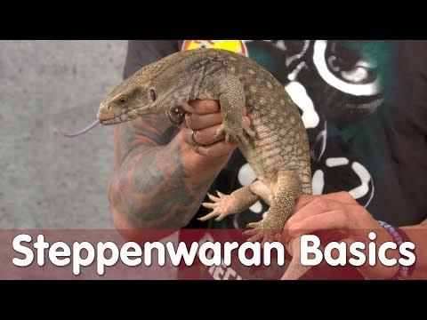 Reptil TV - Folge 104 - Steppenwaran Basic