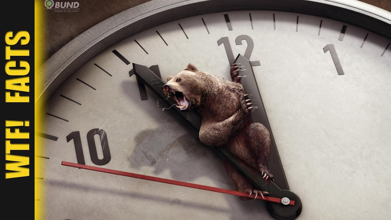 20 Shocking Animal Ad Campaigns That Reveal A Painful
