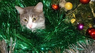 Кот приносит мячик (Красноярск)