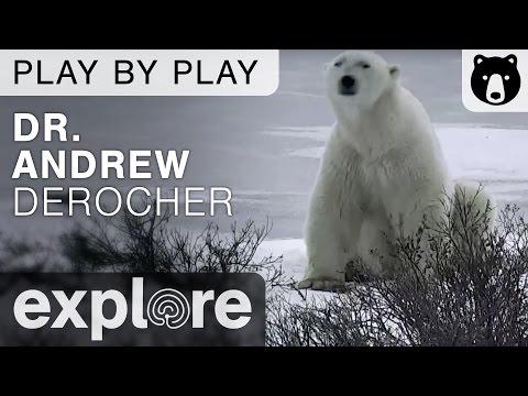Dr. Andrew Derocher Polar Bears International - Play By Play
