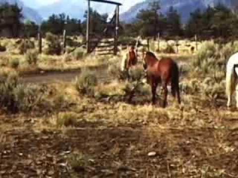 Kid Nichols 1950s Thorofare-Hammit Cabin Elk Hunts