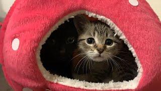 Cute Little Kittens Up Close