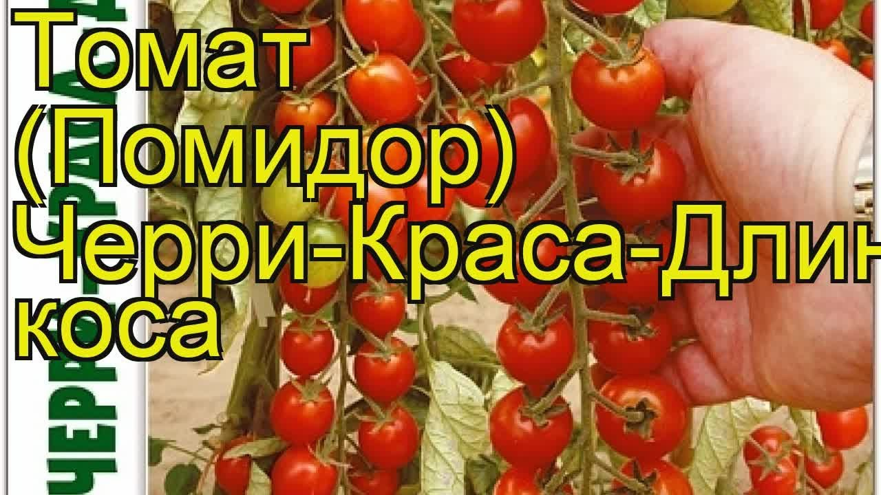 Томат Блэк черри, семена (20.2080): купить семена в интернет .