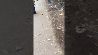 Funny video two tarky's football play