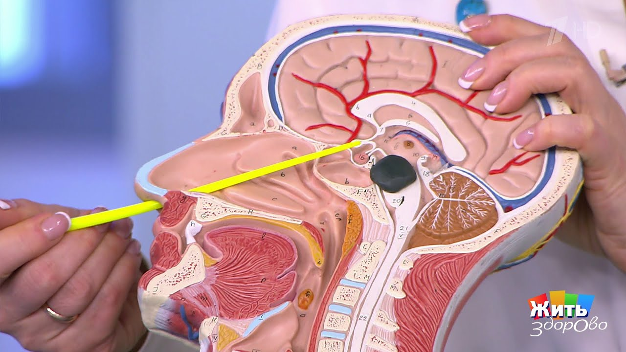 Метод удаления опухоли головного мозга через нос