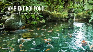 Koi Fish Pond   Calm Flowing Water & Ambient Nature Sounds [Relax, Focus, Meditate, Sleep]