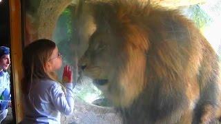 Невероятные животные #7!