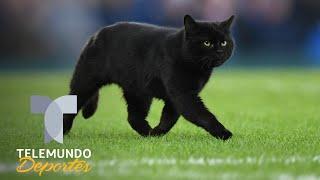 Un gato negro invade el Everton vs. Wolverhampton y se roba el show | Telemundo Deportes