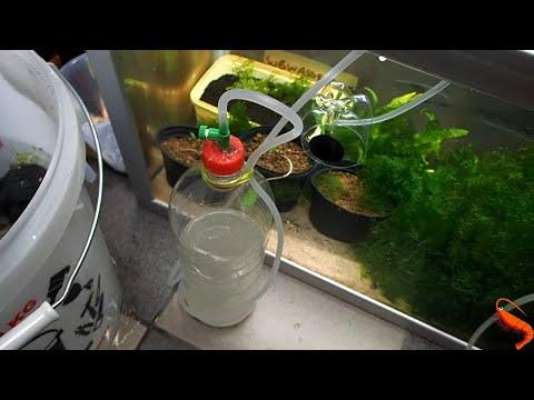 How To Make a DIY Co2 Bottle And Bell For Your  Shrimp Aquarium. Marks Shrimp Tanks 🦐