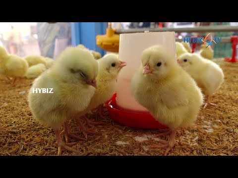 Poultry Exhibition 2017 Hitex Hyderabad