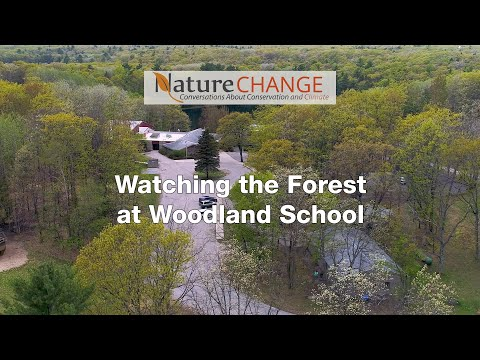 Watching the Forest at Woodland School