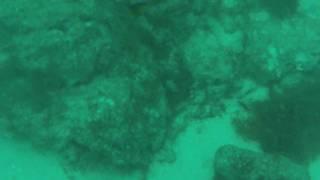 Aruba 2009 - Scuba Diving