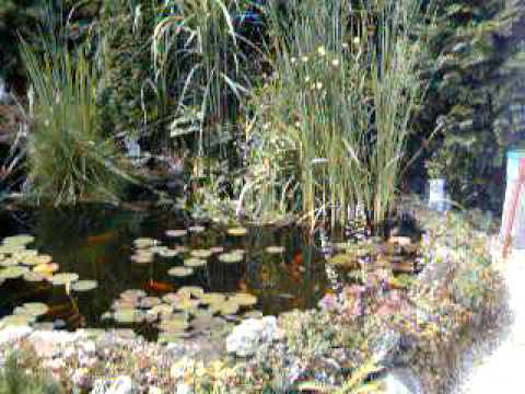 Garten gartenteich teichbau bachlauf koiteich for Gartengestaltung teich