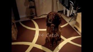 120 Dog Tricks