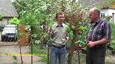 Садовый питомник саженцев агро представляет большой выбор декоративных растений. Наши саженцы адаптированы к местному климату и будут всегда радовать ваш глаз!. У нас вы можете купить саженцы любых пород деревьев.