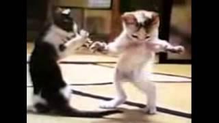 Танцующие коты смешное ржач