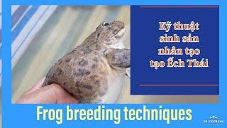 Hướng dẫn sinh sản ếch thái tạo Trại Ếch Tháp Mười  Frog farming techniques in Vietnam  VIỆT C. P