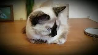 Кошка Боня стесняется...