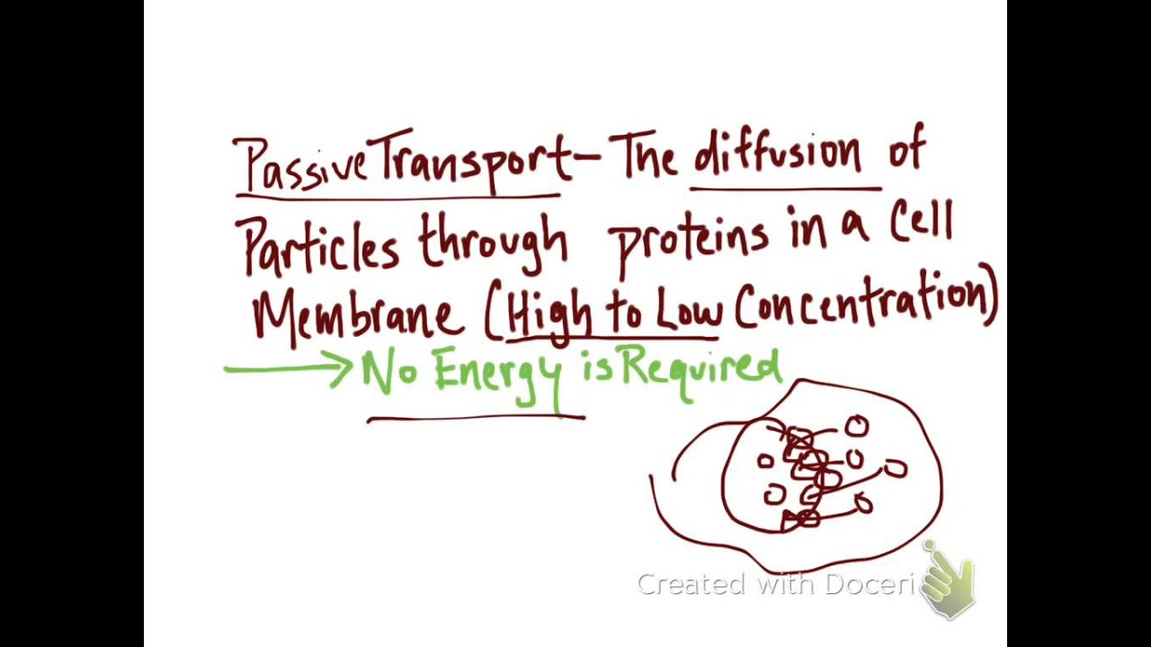 Active And Passive Transport Youtube