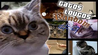 Gatos engraçados e Loucos Random #9 - Funny and Crazy Cats
