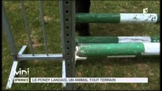 ANIMAUX : Le poney Landais, un animal tout terrain